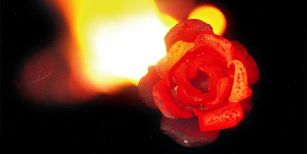 Schmiede Aachen - glühende Rose von Michael Hammers, die aus einem Stück Eisen geschmiedet ist, mit dem Schein des Schmiedefeuers im Hintergrund. Foto: Michael Hammers